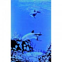 7257 - Royaume des dauphins