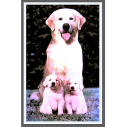 7409 - GOLDEN RETRIEVER